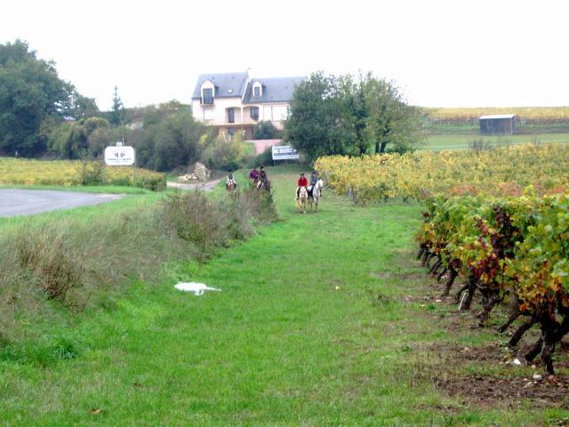 Domaine de la Bessiere - Vigneron indépendant - Saumur-Champigny- Galerie photo : ballade equestre